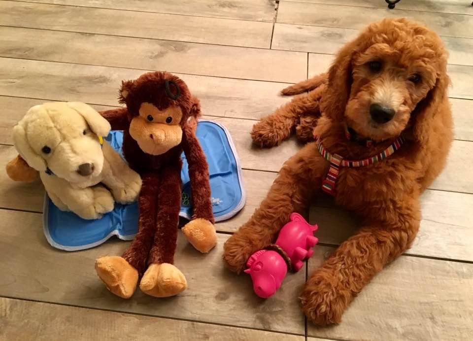 monkey & dogs